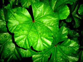 green leaves by iluvvanessa