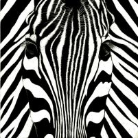 Look into a Zebra's eyes by Jillybean345