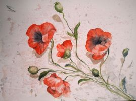 poppies (2) by H-Johanna