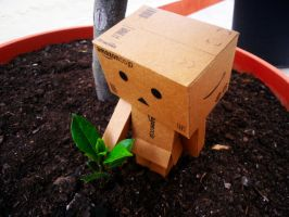 Danbo: growing by eivven