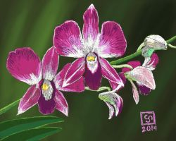 Thailand Orchid by The-Tinidril