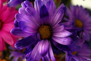 Birthday Flowers 4 by LifeThroughALens84