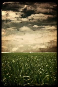 Stormy Field by gurlycliche