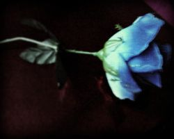 i left a flower for you by lalliphotography