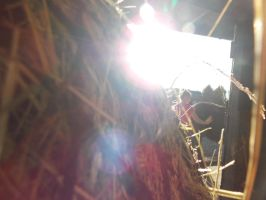 Behind the hay then light by spirtofthedevil