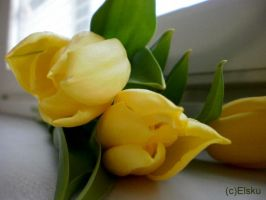 yellow flowers by Elsku93