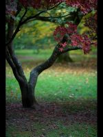 Acer Tree by GMCPhotographics