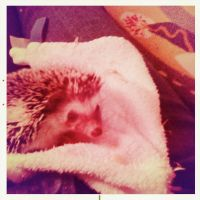 More Pictures of My Hedgehog by narwhalpoo