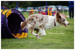 South Durham Agility 02 by tiswindyxx