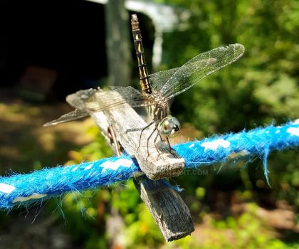 Dragonfly on the Clothesline 3 by ArjaySKing