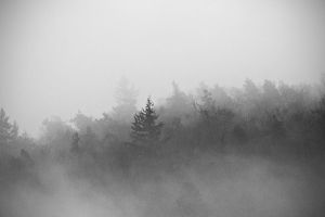 misty forest by donnosch