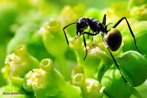 Ant on bright sunny day by hirza
