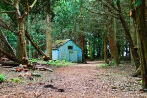 Cabin In The Woods. by ParaSoph