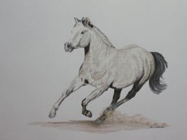 Canter by snapshot1989