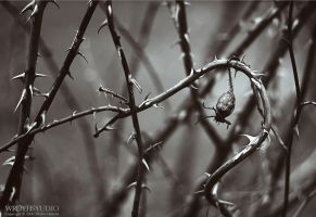 Winter Fruit VII - tone by wroth