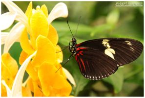 Stockphoto: The Butterfly 02 by JR-Dept