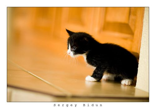 Little White Nose kitty.. by sergey1984