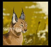 Caracal by mejony