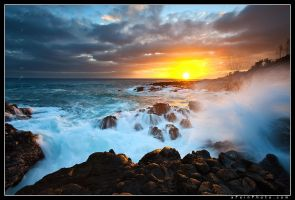 Elemental by aFeinPhoto-com