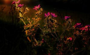 Light Flowers by kErstinR