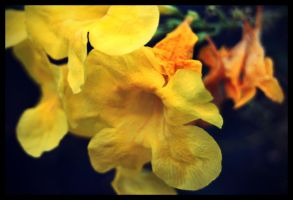 more yellow flowers by fuamnach