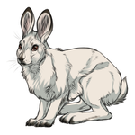 Snowshow Hare Winter Coat by TokoTime