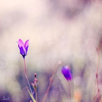 wild flowers by all17