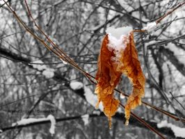 Dead Leaves by ArianeCreations