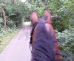 On the Trail with Nureyev *Video in Description* by Paardjee