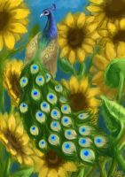 Peacock in the sunflowers by Drakohuhol