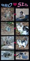 Kittens: Brother and Sister by Isika