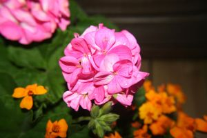 Pink Flowers by Cora-Leigh