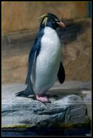 I've got an Attitude by Nameda