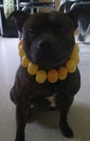 Check out my New Collar :D by demon1993