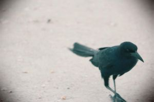 The Crow by IndigoCity