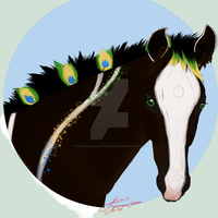 T's Peacock Fancy 830 by TuscanValleyStables