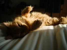 Golden Sun Cat by Blue-eyed-Kelpie