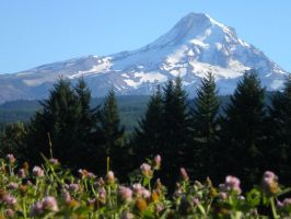 Mt. Hood over field of clover by ThallenCambricaltran