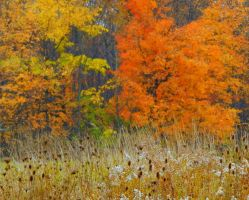 Shades of Autumn 2016, 12 by MadGardens