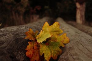 Autumn is drawing closer... by The-Sentenced