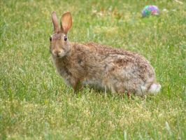 Rabbit 03 by DKD-Stock