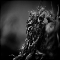Enlarger II - Nature. by RowennaCox