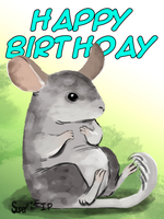 Belated BDay - Chinchilla by Super-kip