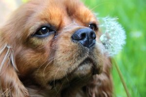 Can I Eat The Dandelion? by zilphotography