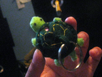 Turtle Plushie- SOLD by SewAnimated