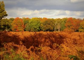 Autumn in Richmond Park XXI by Anissell