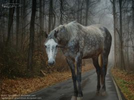 Grey Horse, Long Road by graphicsgonegreat