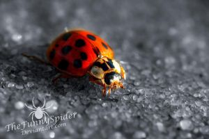 Ladybug in black and white...and red by TheFunnySpider