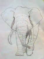 Art Project Elephant by GhostJR