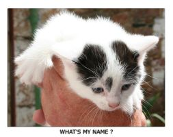 My new Kitten - Name ? by unclejuice